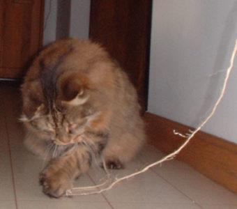 Another cat dander suspect
