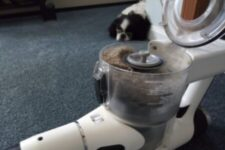 The hair of the dog is in the bind of the vacuum :)