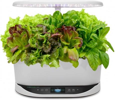 The AeroGarden Bounty gives lettuce for a year