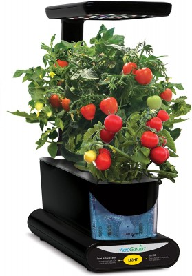 AeroGarden Sprout growing tomatoes