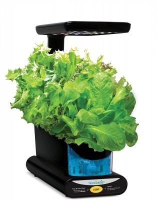 AeroGarden Sprout growing lettuce