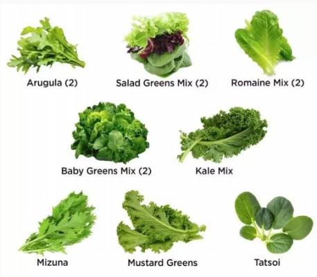 The AeroGaren Salad Lovers Kit (12 pod) comes with 2 arugula, 2 salad greens mix, 2 romaine, 2 baby greens, kale, mizuna, mustard greens and tatsoi.